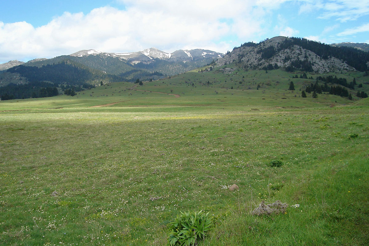 Mountain grassland on Mt. Oiti (Photo: G. Karetsos)