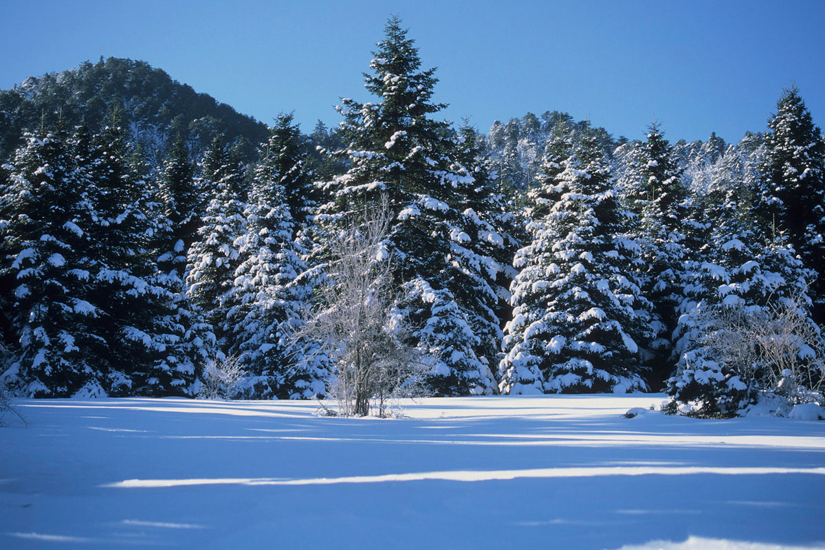Greek Fir forests on Mt. Kallidromo. (Photo: G. Politis)