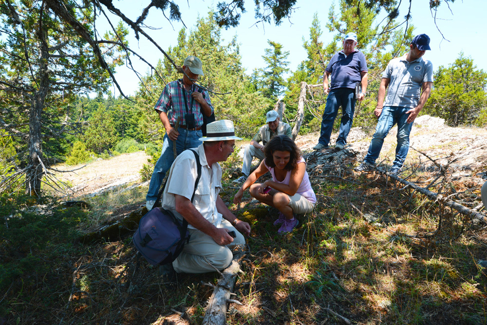 In the juniper forest. (Photo: G. Politis)