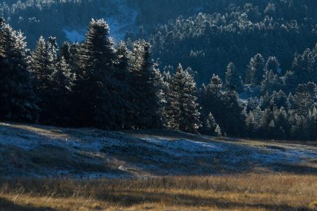 Frosted Fir forest on Mt. Oiti (Photo: Nikos Petrou)