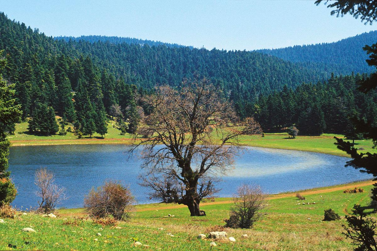 The temporary pond at Nevropolis on Mt. Kallidromo. (Photo: G. Politis