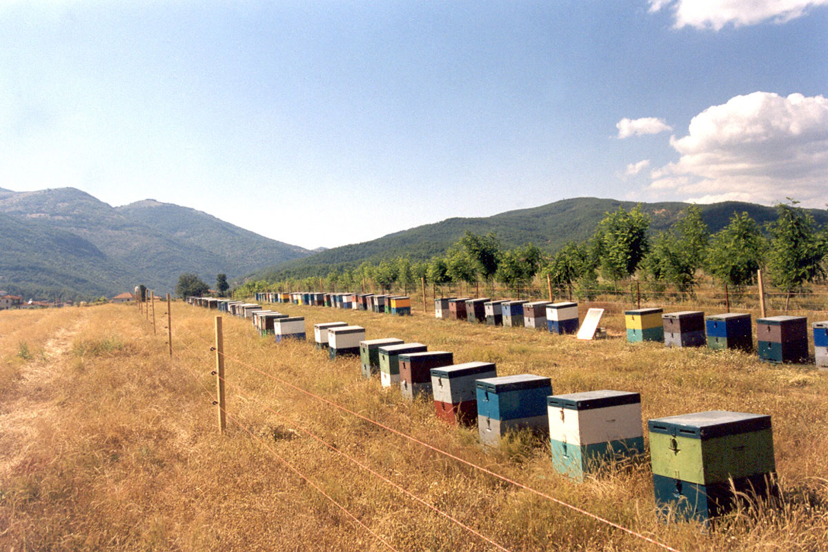Electrified fencing reduces damages to apiaries, thus eliminating one of the main causes of conflict between Brown Bears and the local producers (Photo: ARCTUROS)