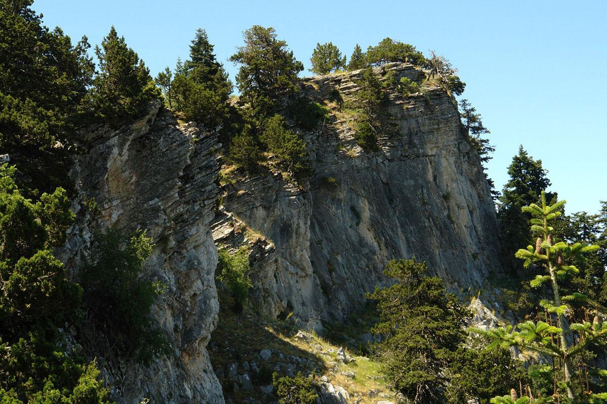 Δασική συστάδα Juniperus foetifissima fστην Οίτη. (Φωτο: Γιώργος Καρέτσος)