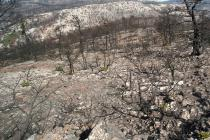 Wildfires are a constant threat for the forests of central and southern Greece (Photo: Nikos Petrou)