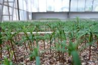 The production of seedlings has started